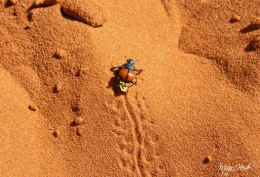 Dung Beetle ~ Sossusvlei, Namibia