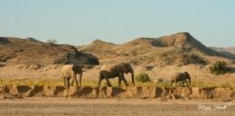 Desert Dwelling Elephants ~ Namibia