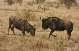 Chobe National Park ~ Botswana